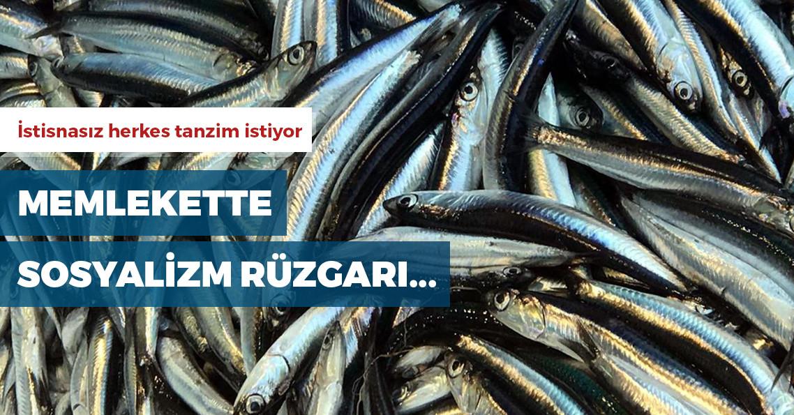 """Balıkçılar hamsiye de """"tanzim satış"""" istiyor"""