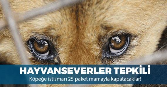 Köpeğe tecavüz davasında tepki çeken uzlaşma!