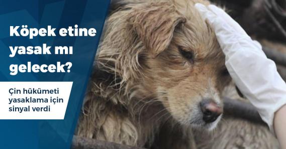 Çin'de köpek eti yemek yasaklanacak mı?